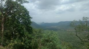 Nalmalla forest